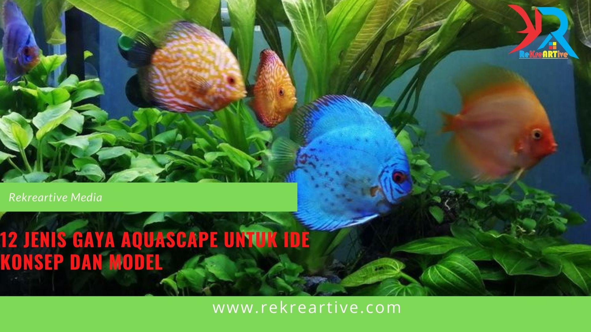 12 Jenis Gaya Aquascape Untuk Ide Konsep Dan Model Rekreartive
