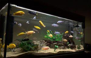 Ikan Aquascape