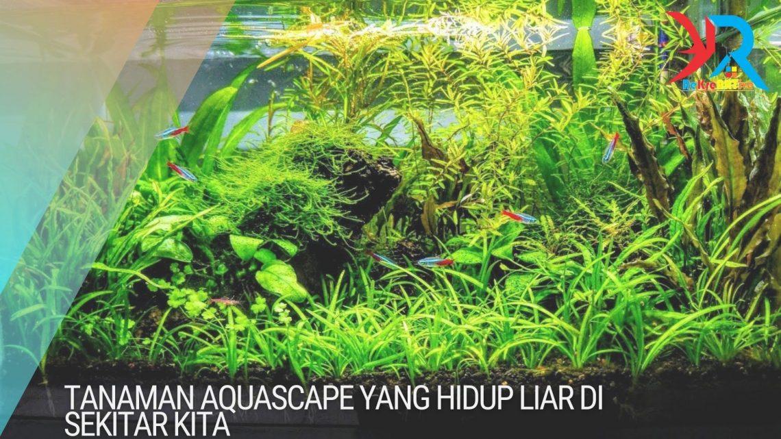 Tanaman Aquascape Yang Hidup Liar di Sekitar Kita ...